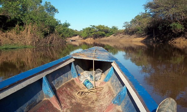 Jungle Adventure: Anacondas, Caimans, and Dolphins