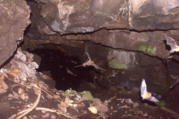Volcanoes, Scorpions, and Bats!