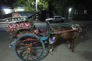 horse carriage shuttle