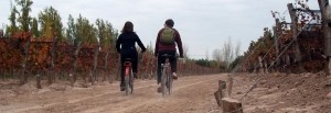 Wine Bike Tours, Mendoza, Argentina